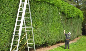 Local Gardener Hedge trimming and removal