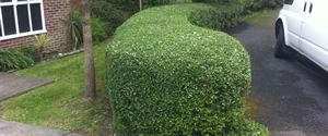Hedge Trimming, Cutting and Shaping